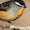 Stoudt - birdie - EftM blog post thumbnail