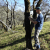 Lead author David Ackerly tags an Oregon oak, one of the species that primarily occupies cooler, north-facing locations, at Pepperwood Preserve. Photo by Michelle Halbur.